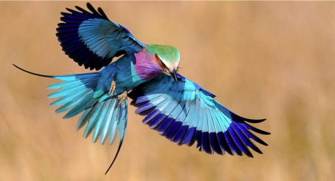 Экзотические птицы невиданной красы