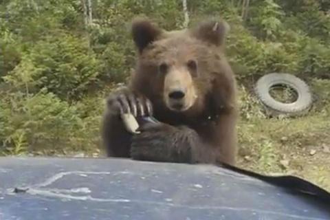 Медведь пропускает дальнобой…