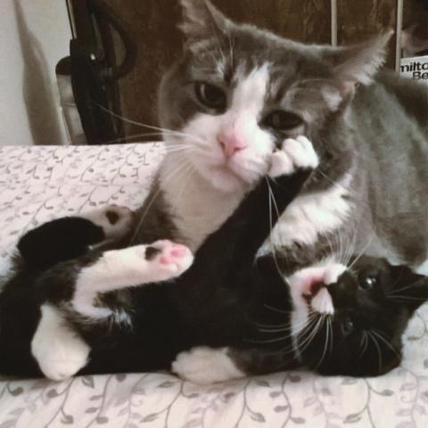 Заботливые мамочки, которые …