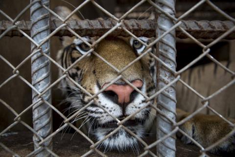 Все о Тигрином монастыре в Таиланде