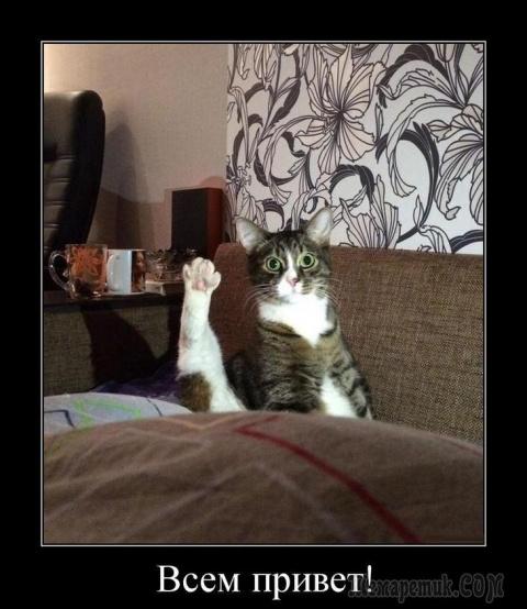 Коты, кошки, котики....