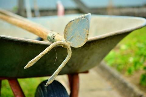 Укрываем чеснок, сажаем черемшу. Как ухаживать за растениями на даче осенью