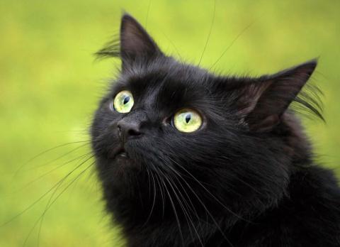 Кошка, которую очень любил Человек...