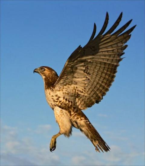 Птицы, которые вполне способ…