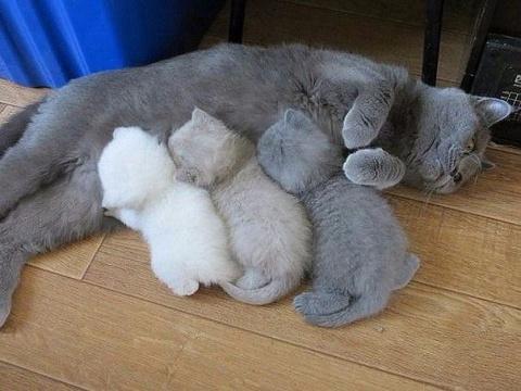Довольные жизнью кошки с мал…