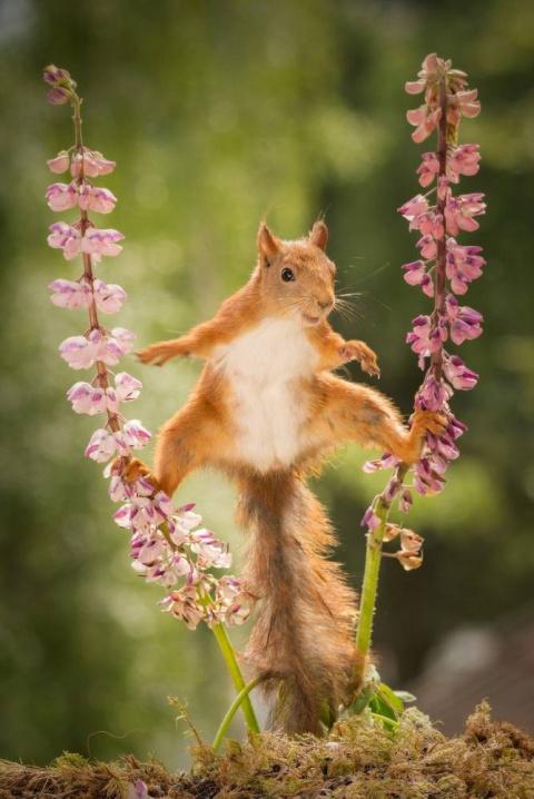 Белка-гимнастка