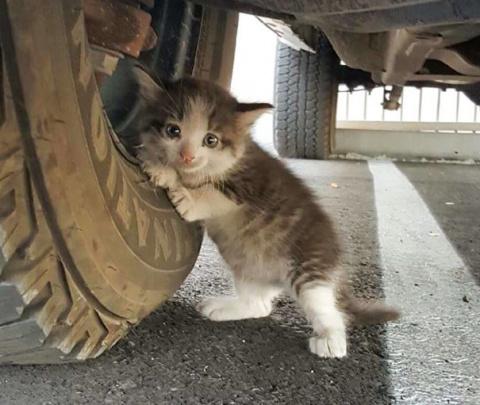 Мужчина увидел под грузовико…