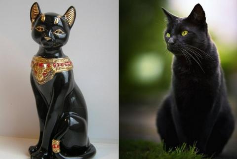 Отношение к черным кошкам в …