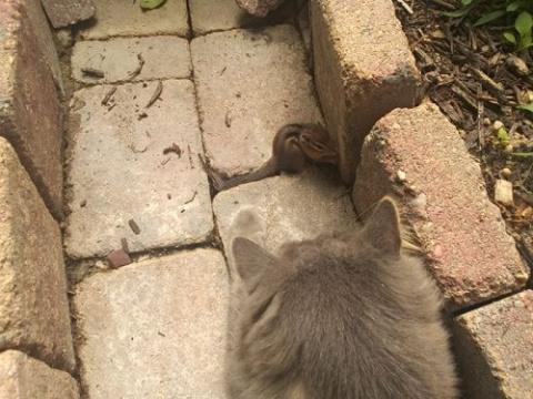 Как подружились кот с бурундуком