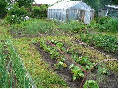 Из опыта дачников и огородников, пригодится многим