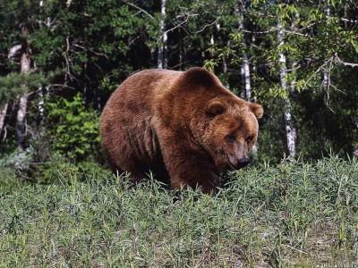 Медведь напал на охотников в Якутии