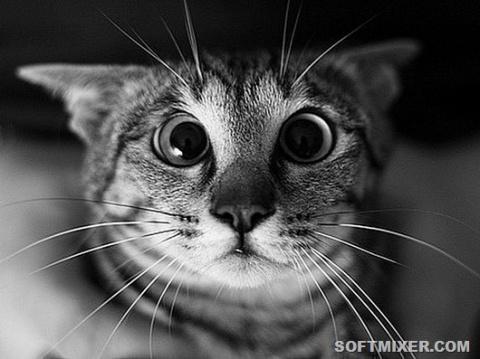 Язык кошачьих поз
