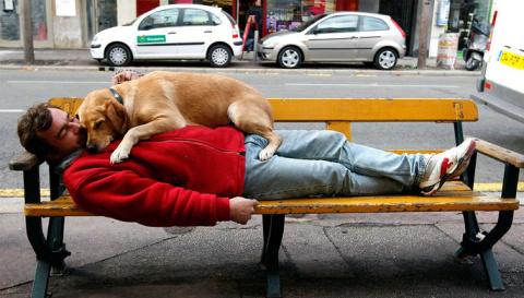 Владельцы собак живут дольше