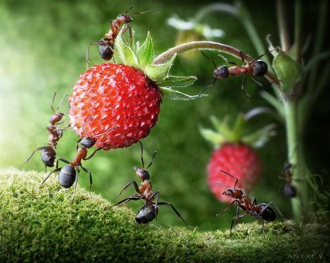 Как отпугнуть муравьев с помощью натуральных ингредиентов?