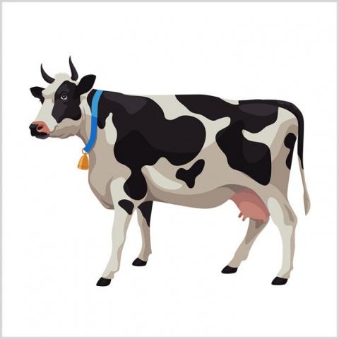 «Я же сказал тебе: купи корову!»
