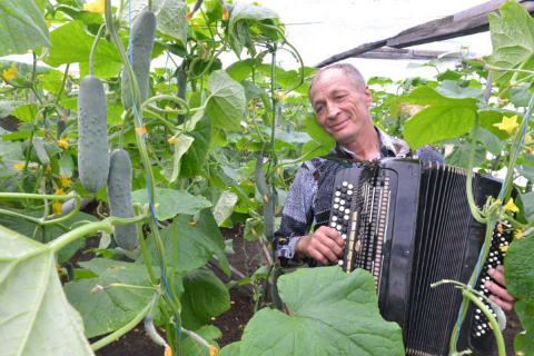 Житель Красноярского края выращивает супер-огурцы... под игру на баяне