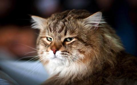 За гибель кота в омской ветк…