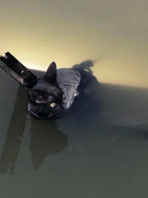 Девушка вытянула кота из рек…