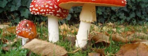 Самые необычные виды грибов