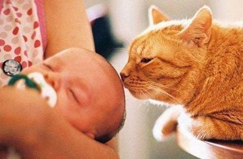 Мысли кота: И где справедлив…