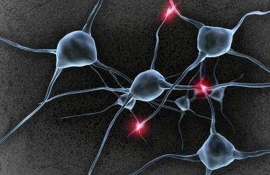 Посветить лазером в нейрон: зачем генетики встраивают в рыбок гены змей