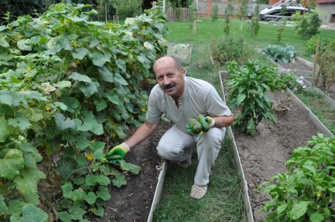 Иностранные гибриды огурцов, которые можно посадить в России