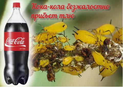 Напоите тлю кока-колой до смерти!
