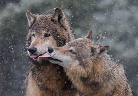 10 животных, которые влюбляю…