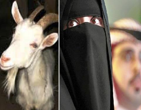Немыслимо! Саудовские ученые пришли к выводу, что женщинам можно даровать права коз и верблюдов