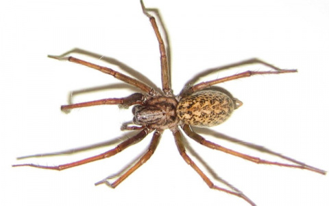 10 пауков, которых действите…