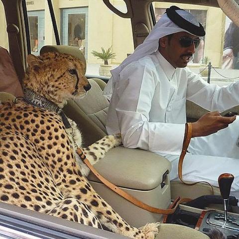 Тем временем в Дубае. Здесь …