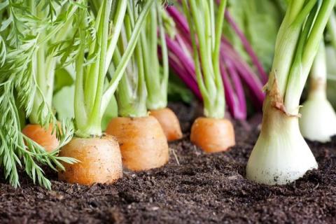 Лук и морковь в «коробах»