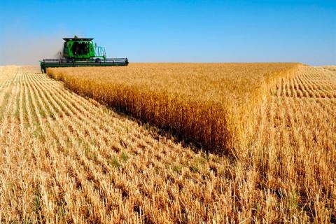 Лучший урожай зерна в истори…