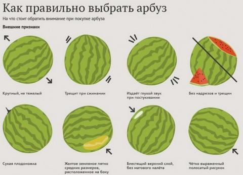 8 признаков хорошего арбуза:…
