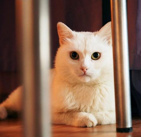 В Казани спасли кота, которы…