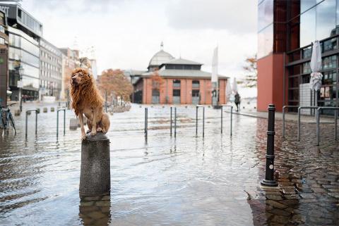 Гордый городской лев фотогра…