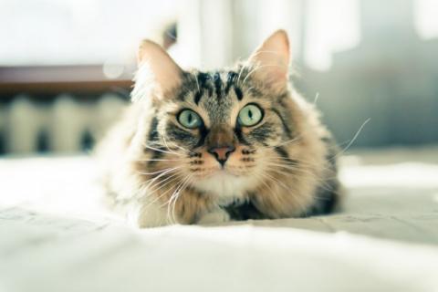 Полезные советы для котов и их владельцев