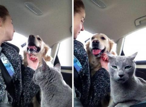 Как живут коты с собаками