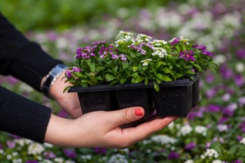 Стоит ли выращивать рассаду однолетников. ЗА и ПРОТИВ