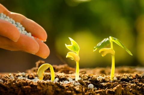 Летние подкормки для вашего огорода: варианты и технологии