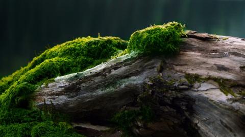 Как вырастить мох на участке…