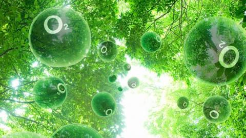 Электронные деревья будут заменять настоящие