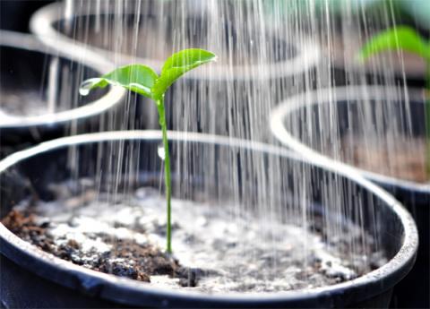 Суперподкормки для рассады из лекарственных трав