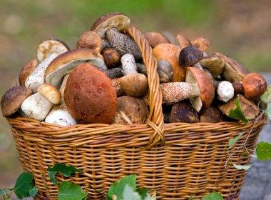 ПОХУДЕЙКИНЫ ДИЕТЫ. Вкусная и полезная грибная диета