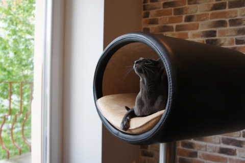 34 милых кота в интерьере, которые заставят вас улыбнуться