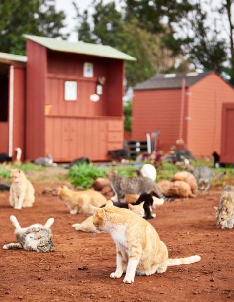 Остров Ланаи на Гавайях — рай для любителей котов и кошек