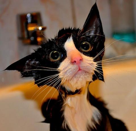 """Мокрые котики или """"Я еще отомщу!"""""""