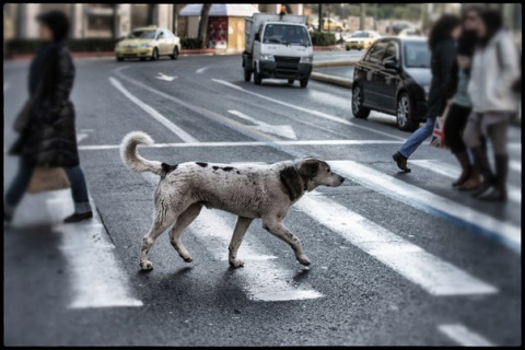 Собаки на улицах Афин