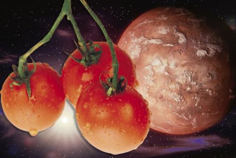 Марсианские помидоры оказали…