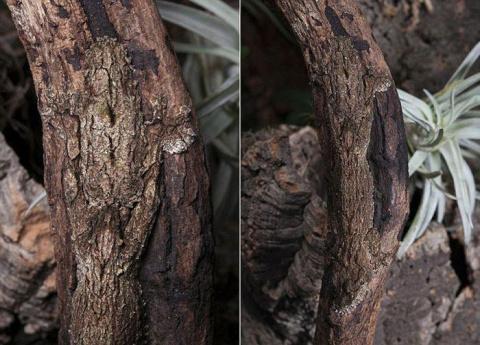 Вы видите на фото геккона? А он там есть!